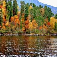 Осенний наряд Телецкого озера :: ирина )))