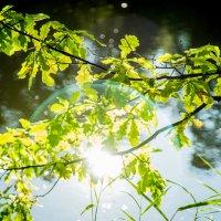 молодые дубки у озера :: Мария Корнилова