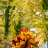 Bouquet of Autumn Leaves :: Asinka Photography