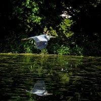 Охота на цаплю :: Maxim Yashkov
