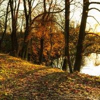 Конец ноября :: Игорь Вишняков