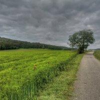 Перед дождём :: Waldemar .