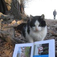 Уличные наблюдения: К юмору кошки относятся серьёзно... :: Алекс Аро Аро
