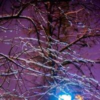 Зима началась... :: Игорь Герман