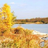 Осень :: Ирина Шпаковская