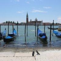 Венеция :: Августа