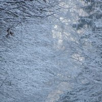 Замер лес в снегу пушистом :: Mariya laimite