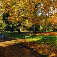 Казарки в парке :: Alexander