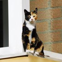 кошка на окошке :: linnud