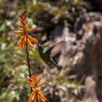 Трапеза колибри :: Gonchar N