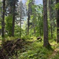 в лесной глуши :: Алена Рыжова