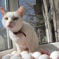 Уличные наблюдения: Если кошка становится несушкой, значит мир меняется кардинально!.. :: Алекс Аро Аро