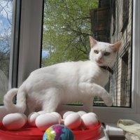 Уличные наблюдения: Ныне даже кошки интересуются геополитикой!.. :: Алекс Аро Аро