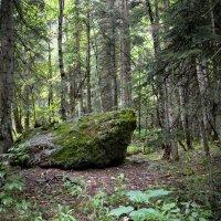 В горном лесу :: Сергей