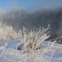 Снежное кружево :: Мария Кухта