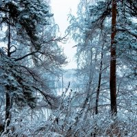 Припорошил ноябрь..... :: Светлана Игнатьева