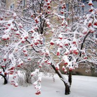 Очень много снега выпало 25 11 2015. :: Мила Бовкун
