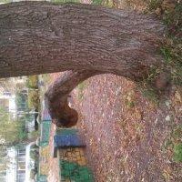 природа постаралась)) :: оля казанина