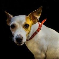 Dog :: Oswaldo Kr.
