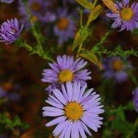 Садовые цветы :: Александр Богданов