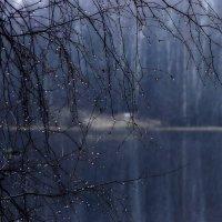 Первый снег..... :: Юрий Цыплятников