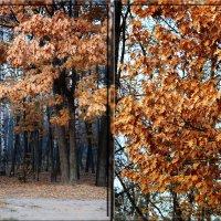 Краски ноября :: Андрей Шейко