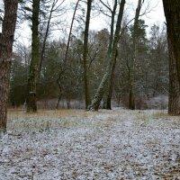 Природа в ноябре :: Милешкин Владимир Алексеевич