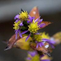 Flower :: Виталий Флюстунов