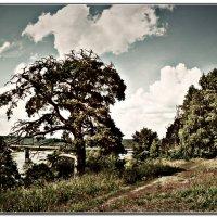 река Юг и причальная сосна :: ВладиМер