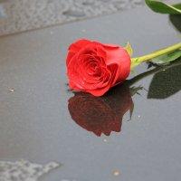роза на мраморе :: Жанна