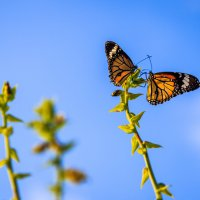 Бабочки :: Anastasia Melnikova