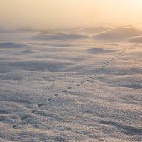Морозец... :: Sergey Apinis