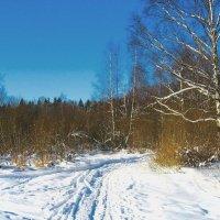 Зимний пейзаж. :: Александр Атаулин
