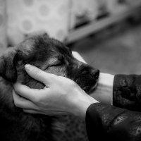 Животные чувствуют доброту... :: Иван Архипов