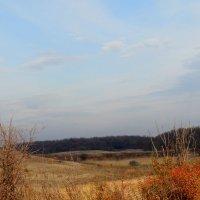 Ноябрьский пейзаж... :: Тамара (st.tamara)