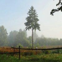 ..напустим туману... :: Владимир Гилясев
