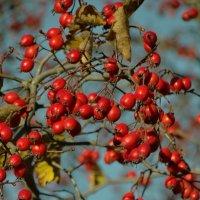 сады осенью..октябрь :: Михаил Жуковский