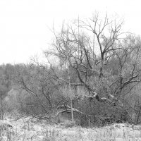 Зима близко :: Андрей Михайлин