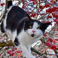 Ёшкин  кот.... :: Валера39 Василевский.