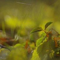 Осенняя сказка :: Annet-T