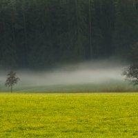 В лесу парит :: Waldemar .