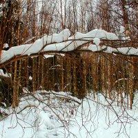 Под тяжестью снега :: Галина Новинская