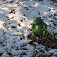 Зима, однако! :: marmorozov Морозова