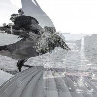 я ворона я ворона на на на на :: Инна