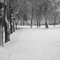 После снегопада :: Юрий Бондер