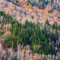 Осенний лес :: Den SkyWet