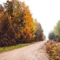 осенний путь :: Yana Odintsova