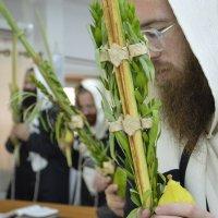 64. благословление на суккот :: Mordechai Novenkii