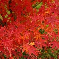 Осенние красоты :: Светлана