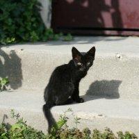 Черный кот...енок :: Юлия Малышева